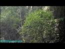 BBC «Тропический рай Борнео» (Документальный, 2007) 3 серия