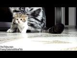 Ми-ми-милое видео - нарезка про котят