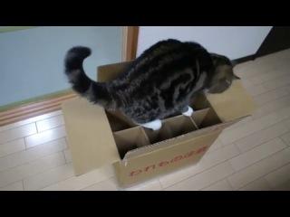 Кот Мару и коробка - Maru the cat and his box