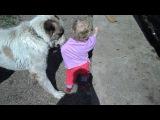 прикол с собакой :)