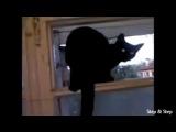 Кот гавкал пока не спалился хозяином!!!