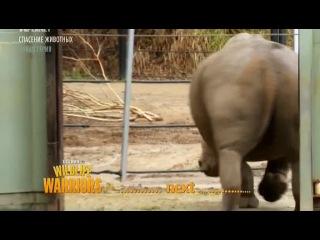 7 of 8 - / Стив Ирвин. В защиту дикой природы / Steve Irwin's. Wildlife Warriors / 2011