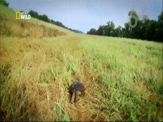 Дикая природа Миссисипи (Дельта-блюз)