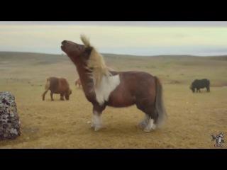 Крутая нарезка классных видео, винов и приколов с животными, ANIMALS ARE AWESOME TOO! HUMANS / PEOPLE ARE AWESOME SPOOF