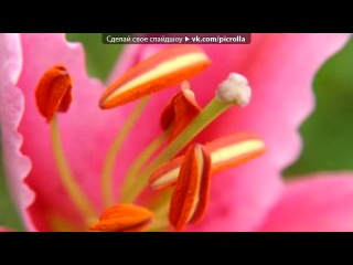 «Картинки на стену» под музыку [mp3ex.net]Сенатор - Три розы. Picrolla
