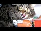 «Основной альбом» под музыку смешарики - про кота, ржака. Picrolla