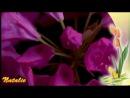 Вечность...Цветы в природе. Музыка для релаксации.