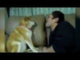 Коты и Собаки которые не любят целовать хозяев