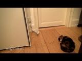 Кот, ужасы, прикол, смешно, угар, котик, носок, до слез, ржака :)
