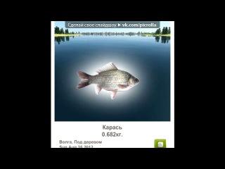«Трофейная рыбалка» под музыку рыбы (день учителя) - смешная песня про рыб. Picrolla