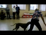 Республиканская выставка собак всех пород 08.02.2014
