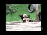 Best Dancing Animal Videos - Viral Video Film School