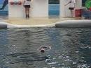 Дельфины и человек