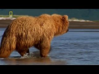 Планета хищников - Царь медведей