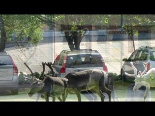 «Финляндия  2013» под музыку Птица Тылобурдо - ФИНСКАЯ народная. Picrolla