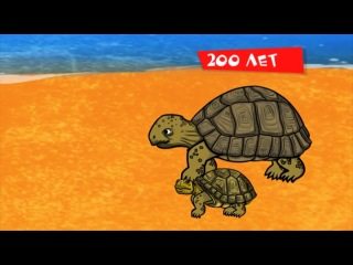 Профессор Почемушкин - 30. Сколько живут черепахи