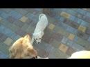 Злые собаки в парке атакуют