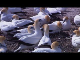 Видеоролик о живой природе;