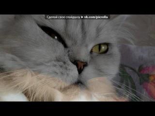 «Со стены ↓Без Кота и жизнь не та↓» под музыку Настя Петрик - Мама. Picrolla