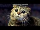 «Со стены Игра «Инди Кот»» под музыку Говорят не повезет - Жил да был чёрный кот за углом. И кота ненавидел весь дом. Только песня совсем не о том, Как не ладили люди с котом. Говорят, не повезёт, Если чёрный кот дорогу перейдёт. А пока наоборот Только чёрному коту и не везёт. Целый день во дворе суета, Прогоняют. Picrolla