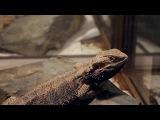 Lizard rocks to the beat