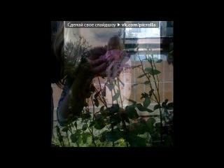 «Мої фотки» под музыку Ця пісня про моїх друзів))) - Дякую,Вам мої любі,що ви є))). Picrolla
