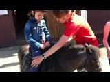 И я и я игого я я я аааааааа...ну очень обидно, когда старшая сестра уезжает на лошадке