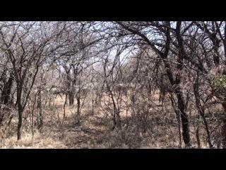 A safari south africa