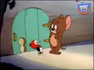 Crtani film - Tom i Džeri - Svako ima svoju muku