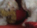Кики и Туся