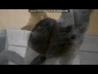 «Со стены Кошки^^ Няшки^^ Обнимашки^^» под музыку Коты - Песня про котов. Picrolla