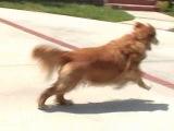 Воспитание собаки без насилия. На улице. Чрезмерный лай
