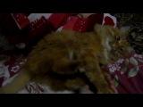Мишка... кот... ляпуся... мило...