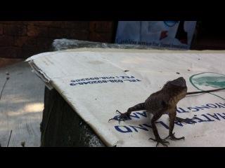 crazy lizard!)я ее словила-таки))))