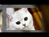 котята и кошки - катя клэп/Kate Clapp. Слайдшоу vertaSlide