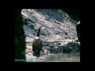 BBC Живая планета Портрет Земли 09 Побережья Документальный 1984