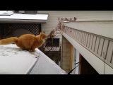 Funny Cat Fails Epic Jump