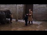 Круглосуточные тусовщики 24 Hour Party People Майкл Уинтерботтом , 2002 (драма, комедия, биография, музыка)