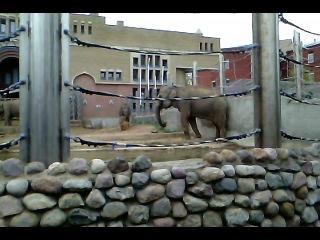 Этот слон должен был быть вместо лошадей в клипе