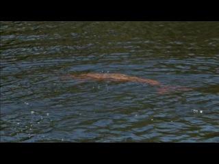 BBC: Морские гиганты / BBC: Ocean Giants (2011). Часть 3 / Part 3. Голоса моря / Voices of the Sea