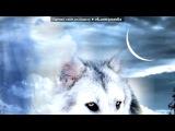 «Красивые Фото • fotiko.ru» под музыку Сергей ИЗБАШ - Одинокий бродяга - волк (