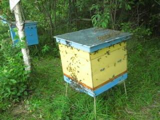 после  отбора  мёда