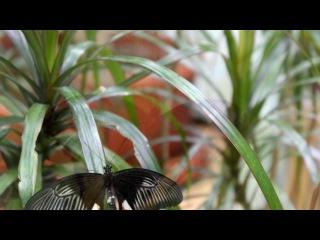 «Мир живых бабочек.» под музыку Jim Carrey - I believe I can fly. Picrolla