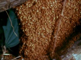 Муравьи убийцы / It Happened at Lakewood Manor (1977) (ужасы, триллер, драма)