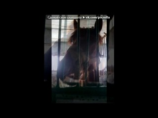 « Конный завод)*****» под музыку Вальс из мультфильма  - Анастасия (на английском). Picrolla