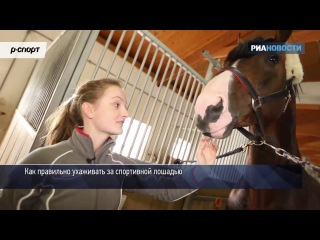 Конюшня на колесах и солярий для лошадей- проект «Галопом в Рио»