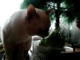 Кот ест траву, но не на окне