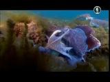 Жизнь на планете Земля. Жизнь в морских глубинах
