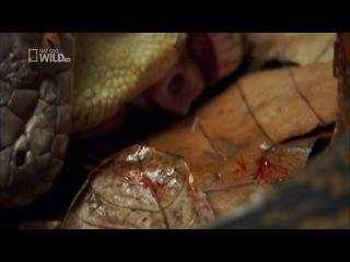 National Geographic. Самые странные в мире: Шокирующая еда / World's Weirdest: Freaky Eats