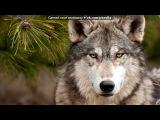 «Со стены Волк - одиночка» под музыку Блатной Удар - Одинокий волк. Picrolla
